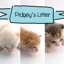 Pidgey's Litter