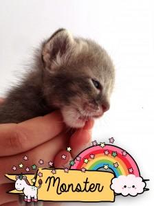 Monster a kitten