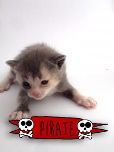 Pirate a Kitten