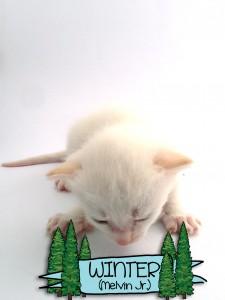 Winter a kitten